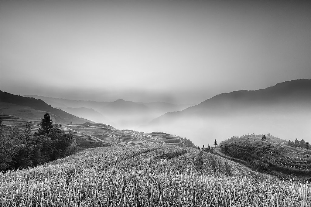IMG-6929-Guangxi-Longshen-20131003-rice-field-in-the-morning-sun.jpg
